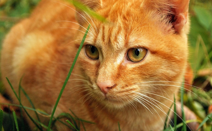 FORGOTTEN CATS